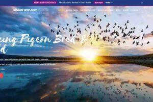 Silvo's Farm - Silviosfarm.com - Racing Pigeons Bred and Sold